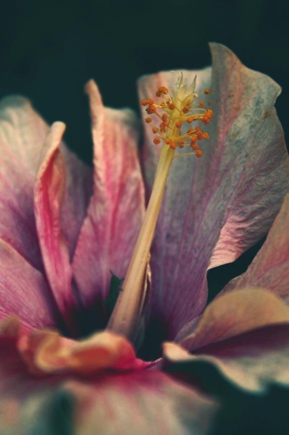 flower-power-3